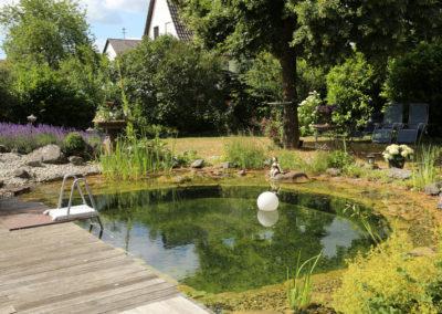 Schwimmen im Garten - Martin Wiebel Gala Bau