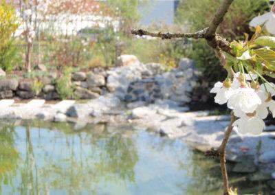 Referenzen, Teich mit Blüte - Wiebel Gartenbau
